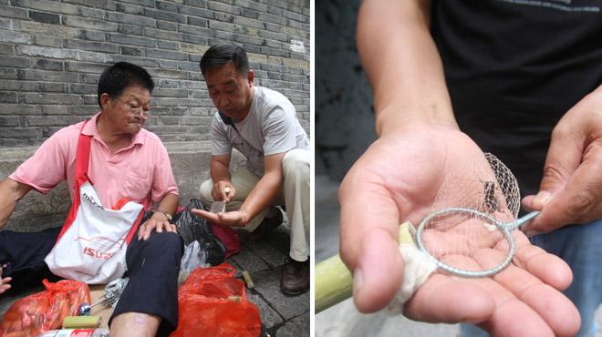小玩意大身段 杭州蟋蟀市场火爆