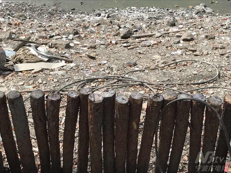 图为月湖边的一排木桩