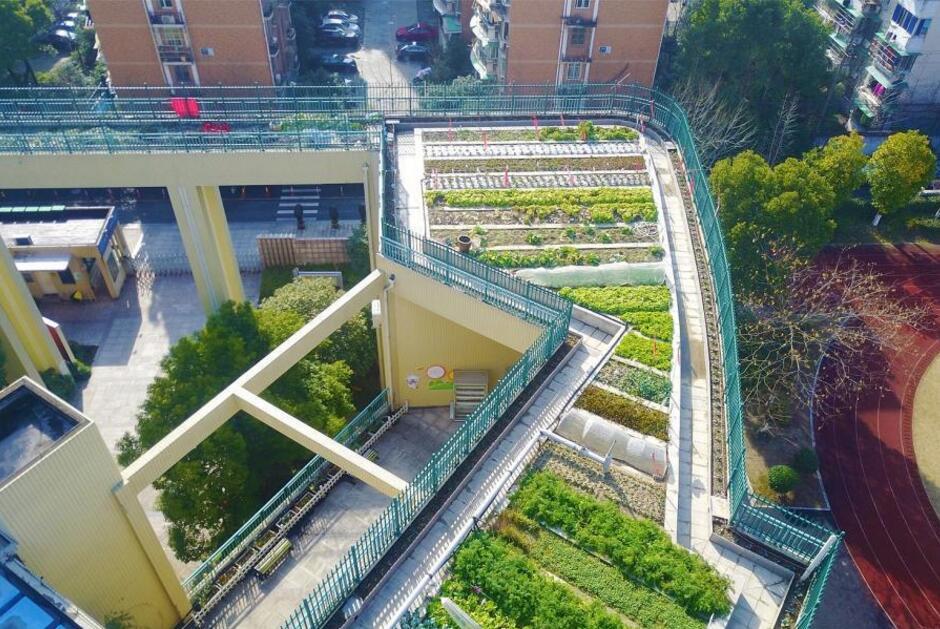 浙江杭州一小学教学楼屋顶变身生态农场