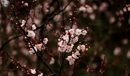 刻叶紫堇、夏天无……这些春花你认识吗?
