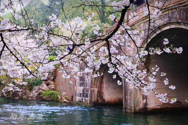 杭城赏花攻略 最美的春天一网打尽!