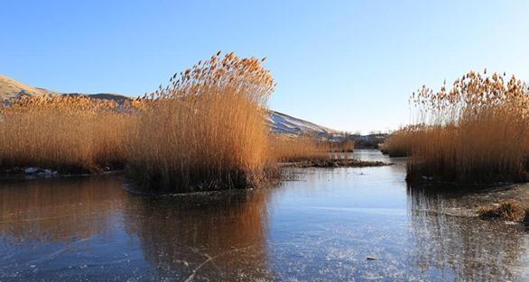 新疆兵团白沙湖初冬美景 静谧迷人似水墨画卷