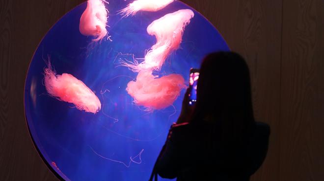 中国湿地博物馆举办水母展
