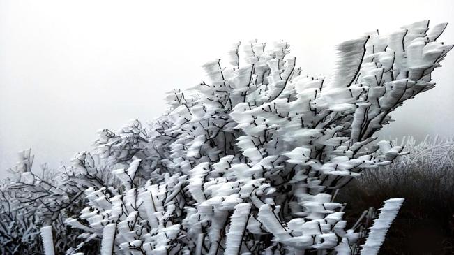 广东连山县金子山再降春雪现奇特冰桂