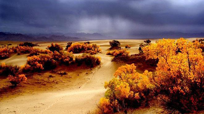 世界海拔最高的胡杨林迎来最美观赏期