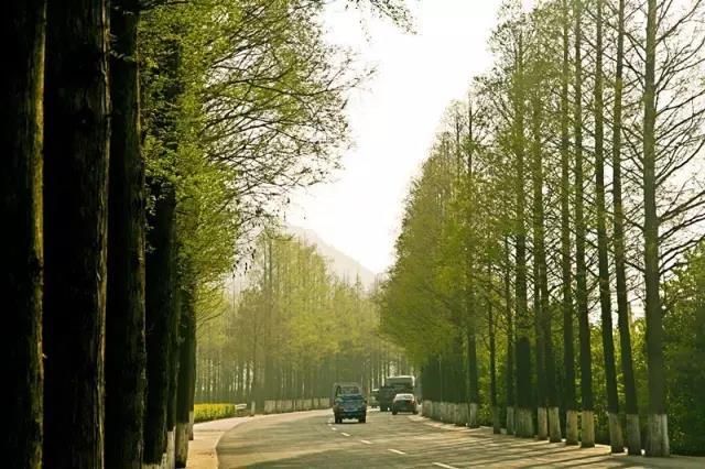 329国道富春江路至陈华段将改建,变身双向6车道