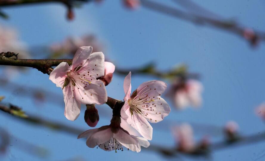 春风迎面吹 梁祝文化园桃花朵朵开
