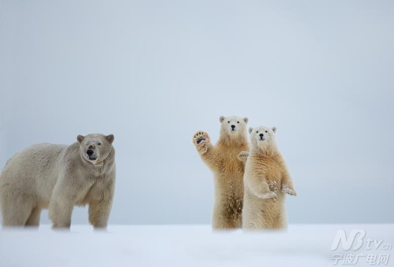 keene在阿拉斯加参观北极国家野生动物保护区捕捉下