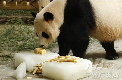 """动物园在大熊猫室外活动场放置了提示牌,""""本宝宝怕热,需要在房间吹"""