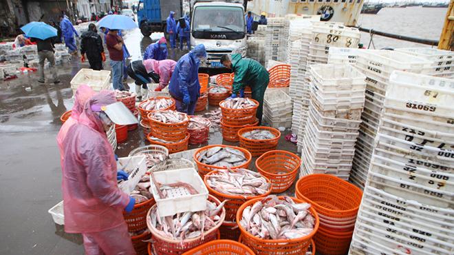 温岭:避风渔船带回满舱鱼